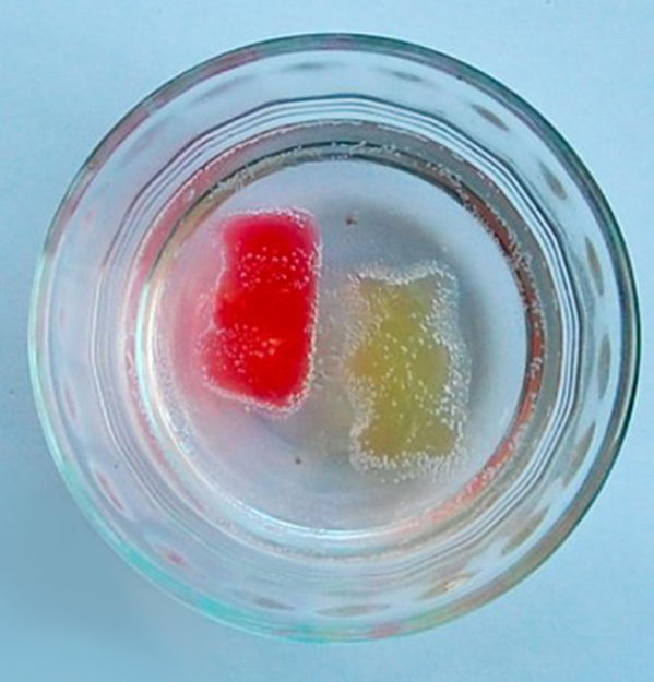 Growing Gummy Bear Experiment for Kids. Gummy bears are made up of water, sugar, and gelatin. Like a sponge, gummy bears will absorb water and grow bigger and bigger but the gelatin keeps the bears from dissolving in the water.