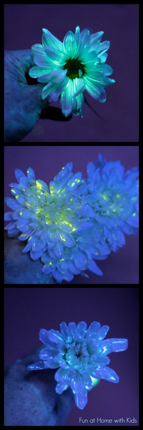 Flower Science Experiment for Kids: DIY Glowing Flowers.