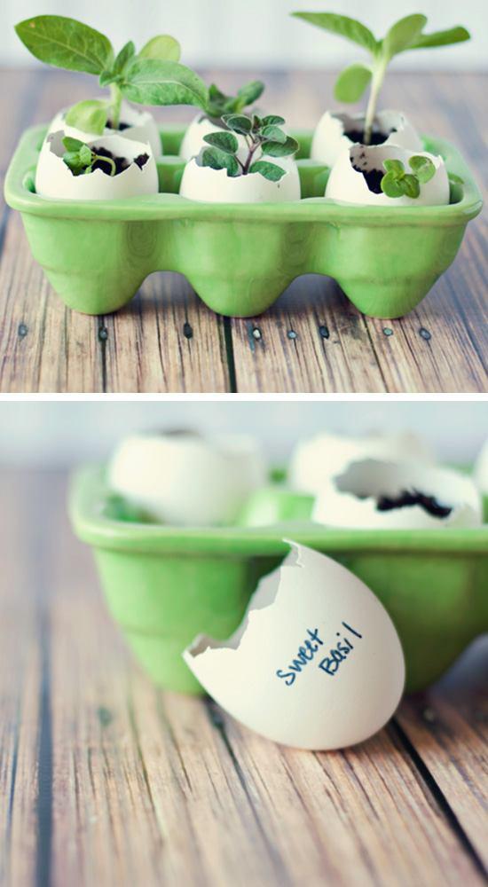 Eggshell Seed Starters.